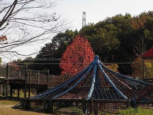 紅葉しているモミジバフウ