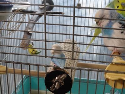 鳥さんが11羽に・・・