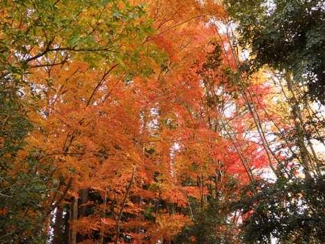 きれぎれの風彩 「丸山公園 紅葉」01