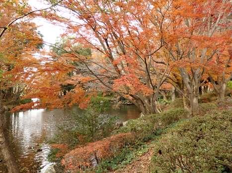 きれぎれの風彩 「丸山公園 紅葉」02
