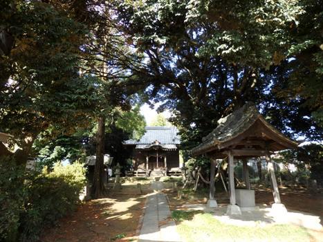 「スダジイ ~多気比売神社の大シイ(2)」