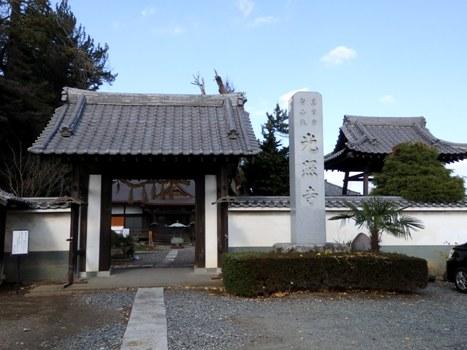 「光照寺のコウヤマキ〔巨樹〕」