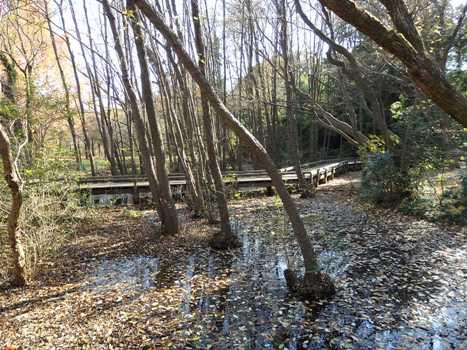 「初冬の伊奈町公園」