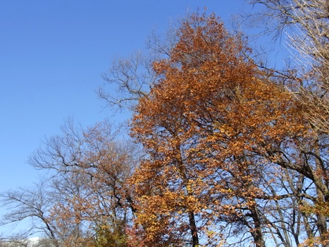 きれぎれの風彩 「北本自然観察公園151220」09
