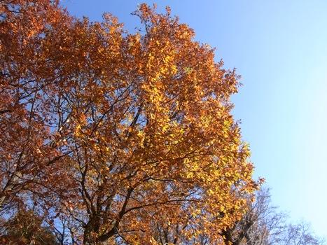 きれぎれの風彩 「北本自然観察公園151220」10