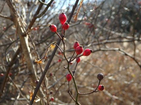 きれぎれの風彩 「北本自然観察公園160111」10