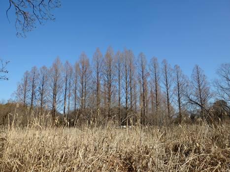 きれぎれの風彩 「丸山公園160116」02
