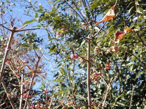 きれぎれの風彩 「秋葉の森総合公園 160128-06