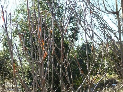 きれぎれの風彩 「秋葉の森総合公園 160128-07