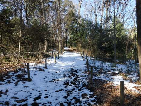 「秋葉の森:自然観察ゾーン(1)」