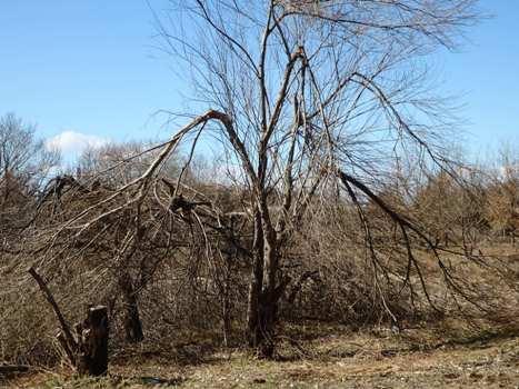「秋葉の森:自然観察ゾーン(2)」