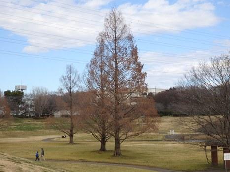 「大宮第二公園の樹木(1)」
