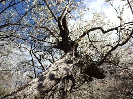 きれぎれの風彩 大宮第二公園の樹木 160301-10