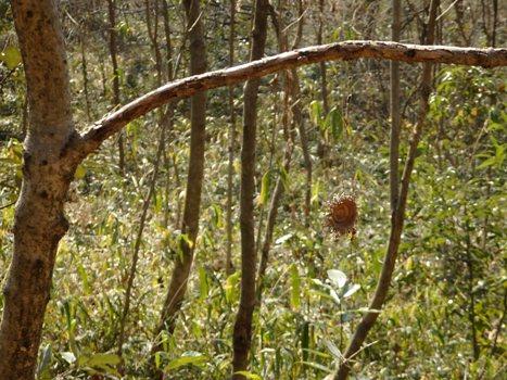 きれぎれの風彩 北本自然観察公園 160228-07