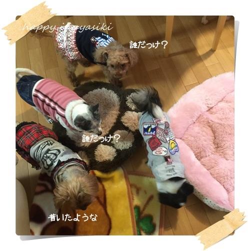 mini5IMG_5829.jpg