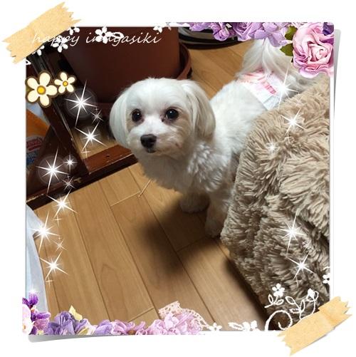 mini5IMG_9037.jpg