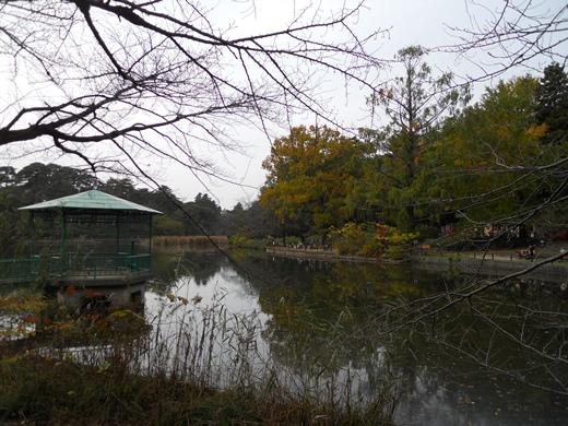 大宮公園4