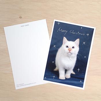 ねこのクリスマスカードweb