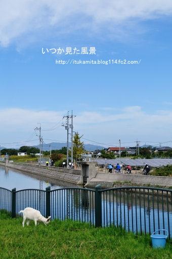 D3C_5324ri-ss.jpg