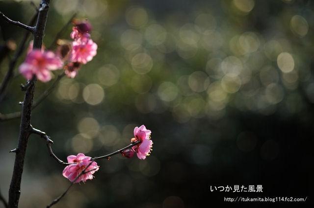 DS7_6590ri-s.jpg