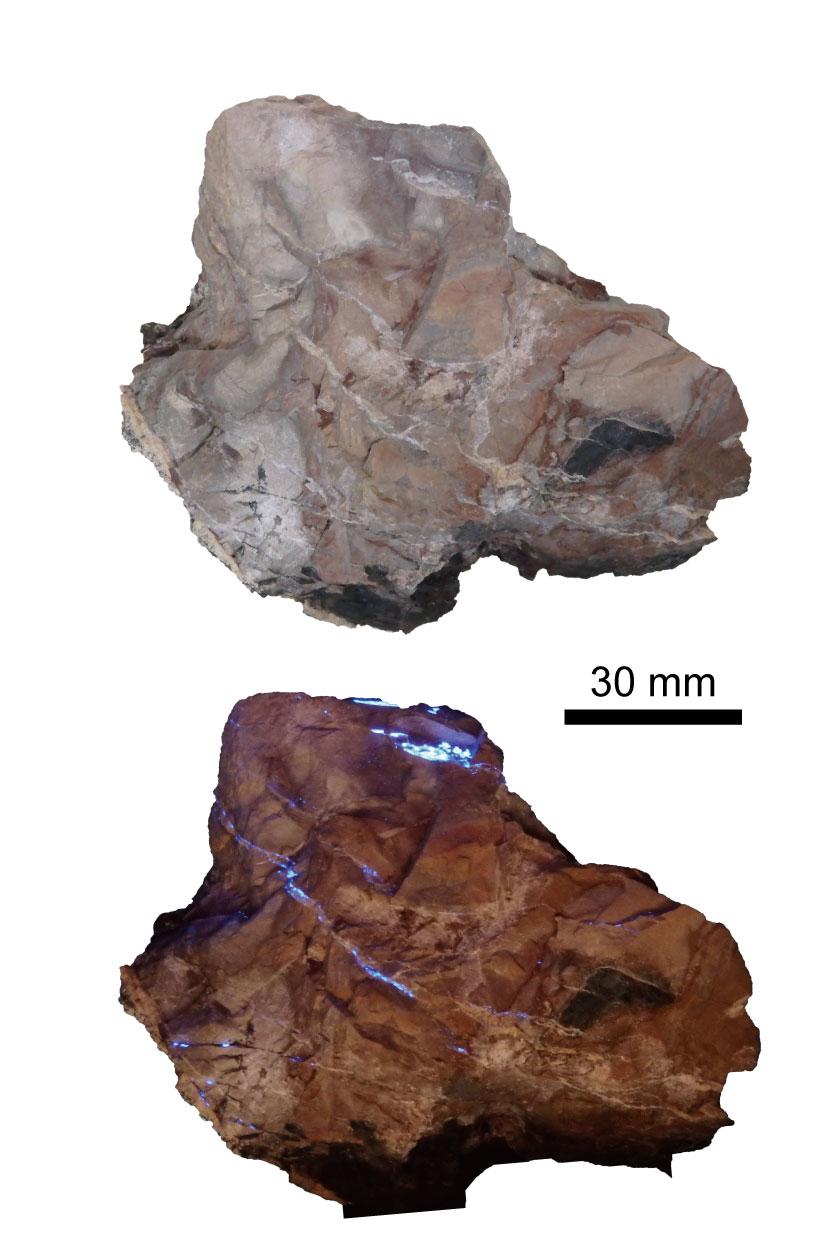東京都奥多摩町白丸鉱山のベニト石とマースター石を含む低変成マンガン鉱石