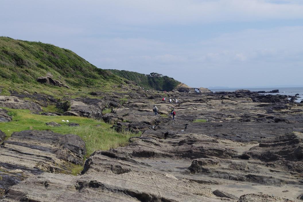 神奈川県三浦 城ヶ島 地層観察 付加体 しゅう曲 火炎状構造 スランプ 断層 活断層