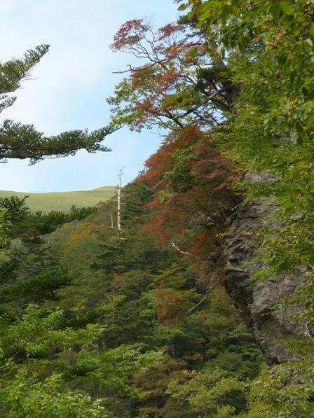 瓶ヶ森林道 少しの紅葉 1