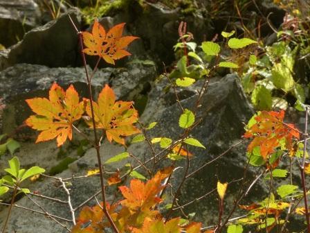 瓶ヶ森林道 少しの紅葉 3