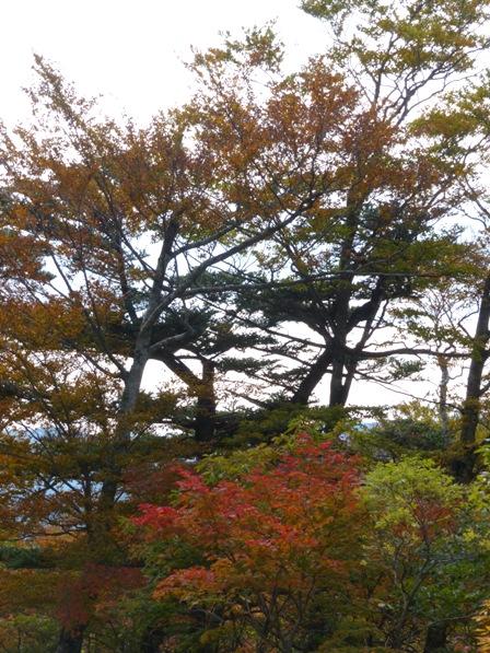 大川嶺付近からの景色 9