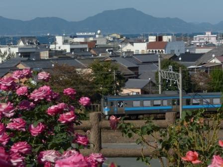 バラ & 7000系電車 2