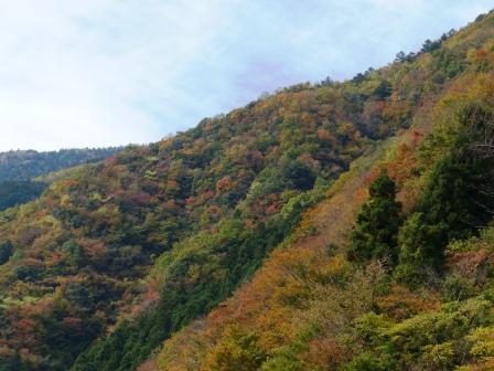 面河渓の紅葉 1
