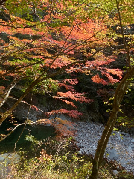 面河渓の紅葉 4