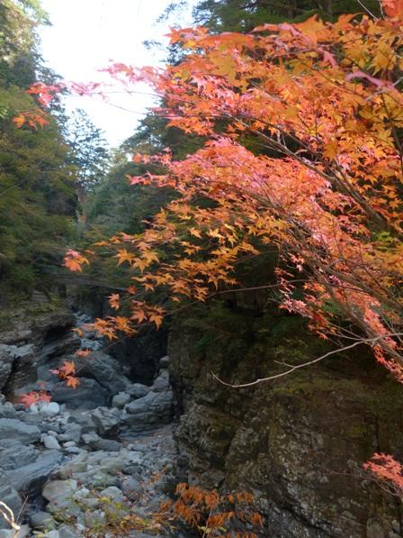 面河渓の紅葉 5