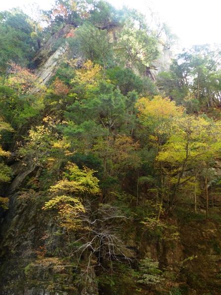 面河渓の紅葉 11