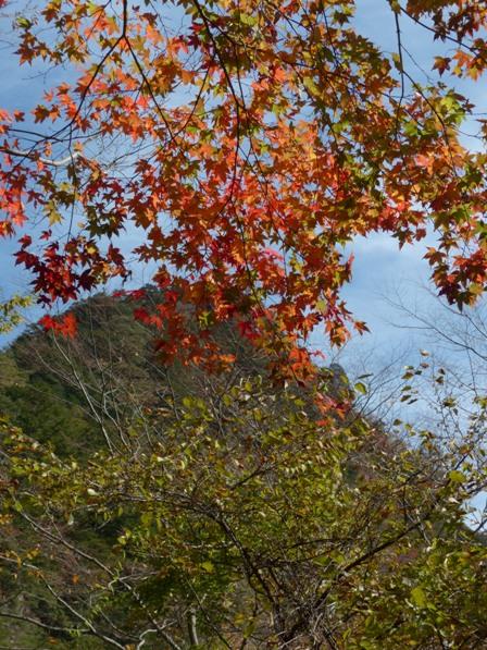 面河渓の紅葉 12