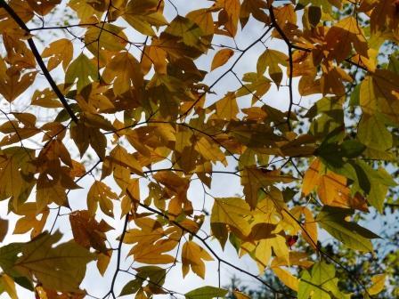 面河渓の紅葉 17