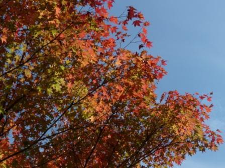古岩屋の紅葉 1