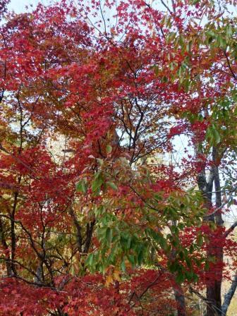 古岩屋の紅葉 2