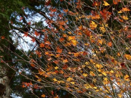 住友の森 紅葉