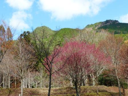 住友の森 マユミの木など