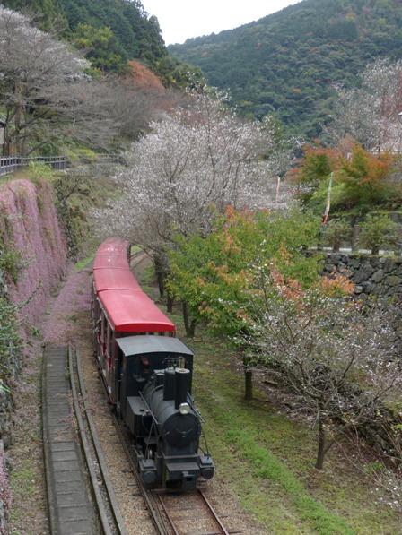 マイントピア別子 冬桜 & ヒメツルソバ & 観光鉄道