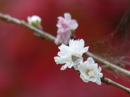 マイントピア別子 紅葉 & 冬桜 3