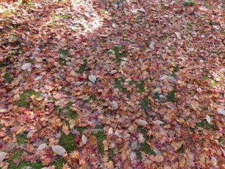 滑川渓谷・紅葉の落ち葉 1