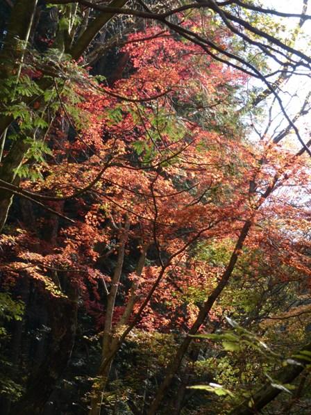 滑川渓谷の紅葉 3