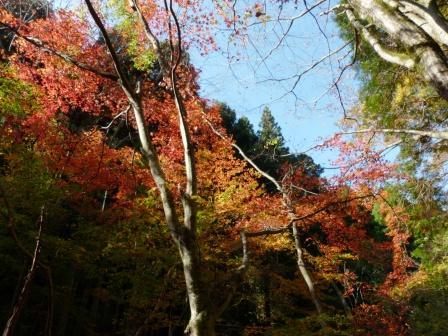 滑川渓谷の紅葉 4