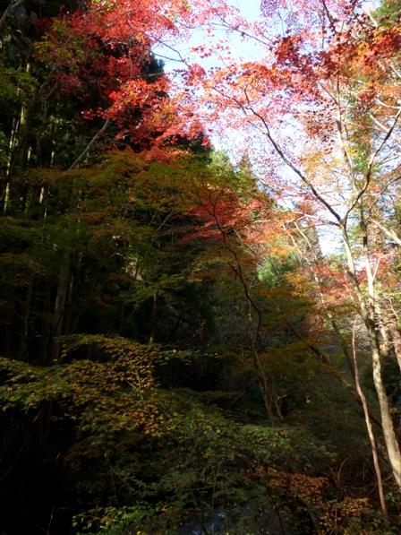 滑川渓谷の紅葉 5