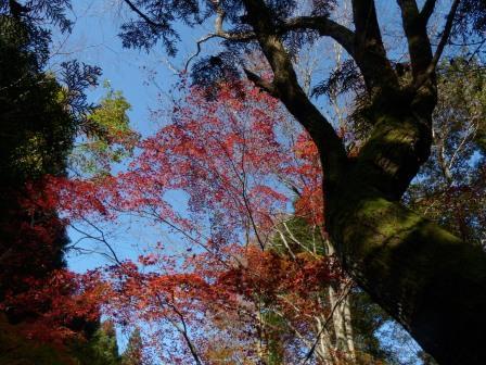 滑川渓谷の紅葉 6
