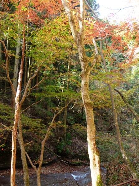 滑川渓谷の紅葉 8