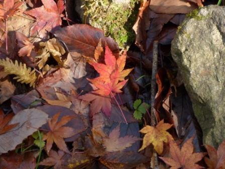 滑川渓谷・紅葉の落ち葉 2