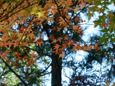滑川渓谷の紅葉 9